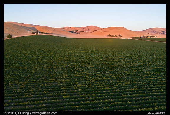 Aerial view of vineyards and hills at sunset. Livermore, California, USA (color)