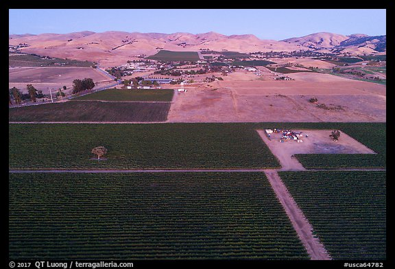 Aerial view of vineyards and hills at dusk. Livermore, California, USA (color)
