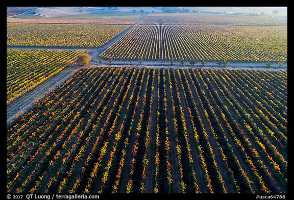 Aerial view of vineyards in autumn. Livermore, California, USA (color)