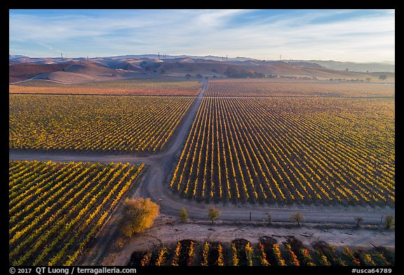 Aerial view of rows of vines and paths. Livermore, California, USA (color)