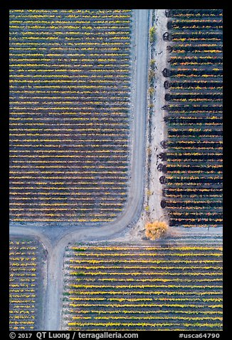 Aerial view of vineyards, tree and paths looking straight down. Livermore, California, USA (color)