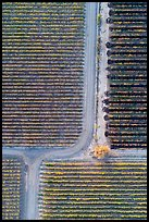 Aerial view of vineyards, tree and paths looking straight down. Livermore, California, USA ( color)