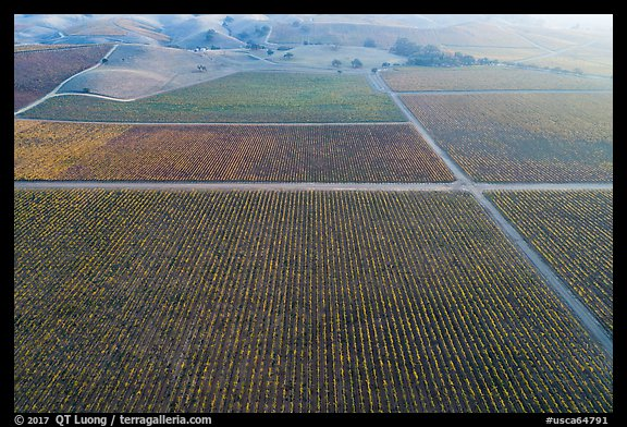 Aerial view of multicolored vineyards in autumn. Livermore, California, USA (color)