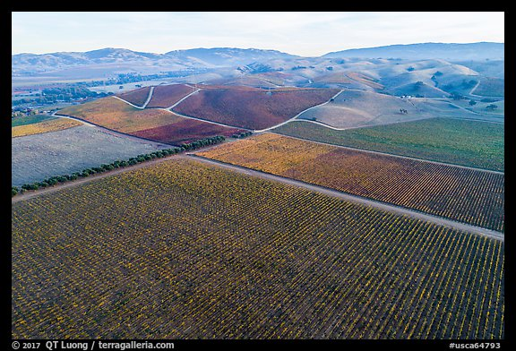 Aerial view of multicolored vineyards and hills in the fall. Livermore, California, USA (color)