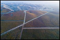 Aerial view of autumn vineyards with hazy hills. Livermore, California, USA ( color)