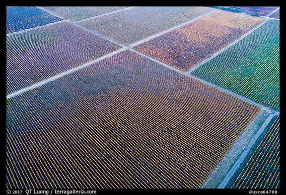 Aerial view of multicolored patches of vineyards in autumn. Livermore, California, USA (color)