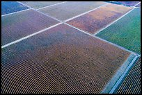 Aerial view of multicolored patches of vineyards in autumn. Livermore, California, USA ( color)
