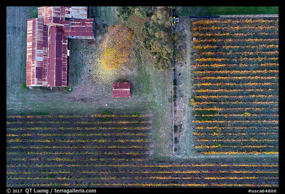 Aerial view of rusted barn and rows of vines looking straight down. Livermore, California, USA (color)