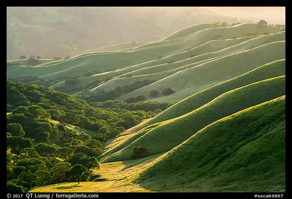 Oaks and ridges, late afternoon, Del Valle Regional Park. Livermore, California, USA (color)