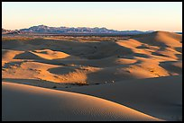 Dunes and mountains at sunset, Cadiz Dunes. Mojave Trails National Monument, California, USA ( color)
