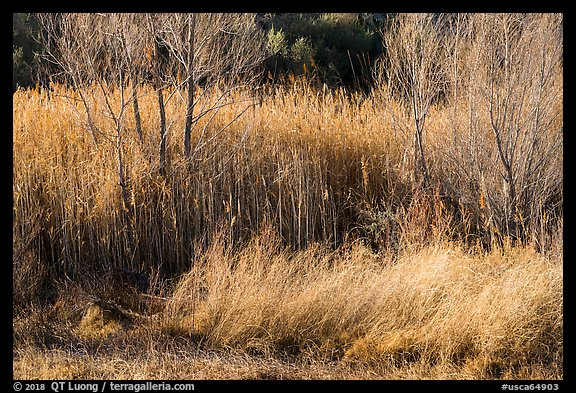 Willows in winter, Afton Canyon. Mojave Trails National Monument, California, USA (color)