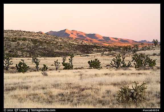 Desert grassland and New York Mountains at sunrise. Castle Mountains National Monument, California, USA (color)