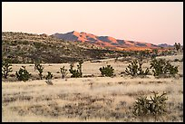 Desert grassland and New York Mountains at sunrise. Castle Mountains National Monument, California, USA ( color)