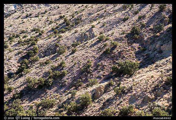 Slopes with juniper trees. Castle Mountains National Monument, California, USA (color)