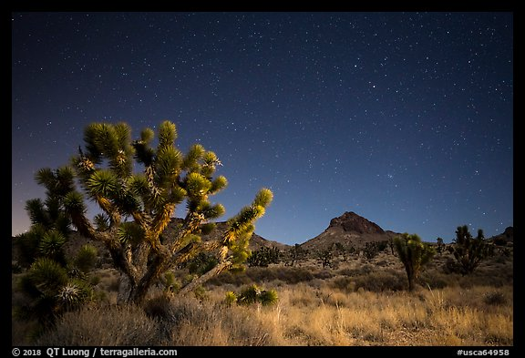 Joshua tree, grasses, and Hart Peak at night. Castle Mountains National Monument, California, USA (color)