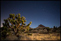 Joshua tree, grasses, and Hart Peak at night. Castle Mountains National Monument, California, USA ( color)