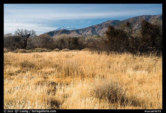Grassy meadow and San Gorgonio Mountain in winter, Big Morongo Canyon Preserve. Sand to Snow National Monument, California, USA (color)