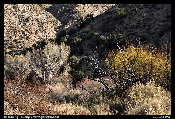 Trees in winter and foothills, Big Morongo Canyon Preserve. Sand to Snow National Monument, California, USA (color)