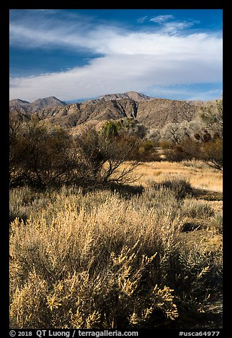Grasses, bare trees, and mountains, Big Morongo Canyon Preserve. Sand to Snow National Monument, California, USA (color)