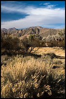 Grasses, bare trees, and mountains, Big Morongo Canyon Preserve. Sand to Snow National Monument, California, USA ( color)