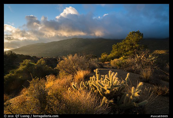 Cactus, Pinyon pines and Santa Rosa Mountains. Santa Rosa and San Jacinto Mountains National Monument, California, USA (color)