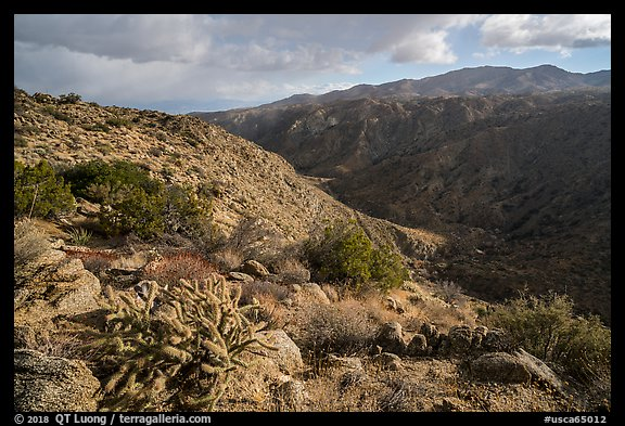 Desert plants and Deep Canyon. Santa Rosa and San Jacinto Mountains National Monument, California, USA (color)
