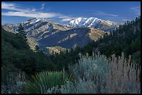 Desert shrubs, pine forests, and  Mount San Antonio. San Gabriel Mountains National Monument, California, USA ( color)