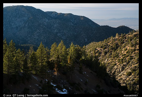 Pine trees and ridges. San Gabriel Mountains National Monument, California, USA (color)