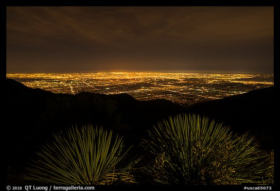 Succulents and lights of Los Angeles at night from Mount Wilson. San Gabriel Mountains National Monument, California, USA (color)