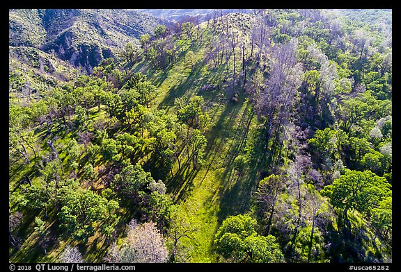 Aerial view of hillside, Cache Creek Wilderness. Berryessa Snow Mountain National Monument, California, USA (color)
