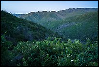 Wildflowers above Cold Canyon at dusk. Berryessa Snow Mountain National Monument, California, USA ( color)