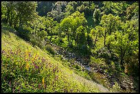 Wildflowers above Eticuera Creek. Berryessa Snow Mountain National Monument, California, USA ( color)