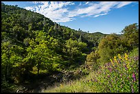Wildflowers and hills above Eticuera Creek. Berryessa Snow Mountain National Monument, California, USA ( color)