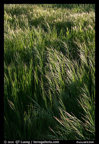 Grasses in spring, Cache Creek Wilderness. Berryessa Snow Mountain National Monument, California, USA (color)