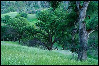 Blue Oak trees and valley in springtime, Cache Creek Wilderness. Berryessa Snow Mountain National Monument, California, USA ( color)