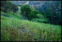 Wildflowers, oak trees, and valley in the spring, Cache Creek Wilderness. Berryessa Snow Mountain National Monument, California, USA ( color)