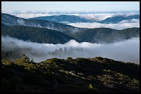 Ridges and low clouds, Snow Mountain Wilderness. Berryessa Snow Mountain National Monument, California, USA ( color)