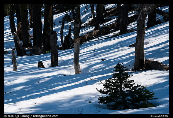 Shadows in snowy forest, Snow Mountain Wilderness. Berryessa Snow Mountain National Monument, California, USA (color)