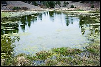 Pond with aquatic plants, Snow Mountain Wilderness. Berryessa Snow Mountain National Monument, California, USA ( color)