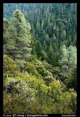 Lush mixed forest in valley near Bear Creek. Berryessa Snow Mountain National Monument, California, USA (color)
