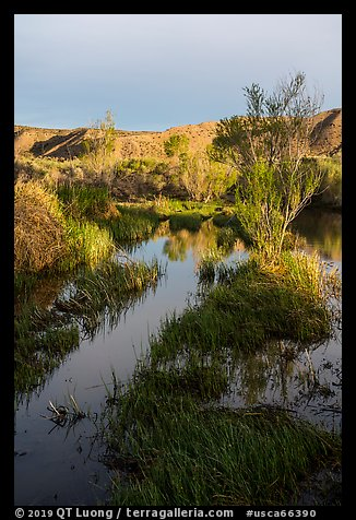 Mojave River crossing at sunrise. Mojave Trails National Monument, California, USA (color)