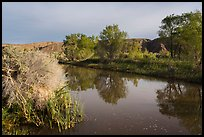 Cottonwood trees reflected in Mojave River. Mojave Trails National Monument, California, USA ( color)