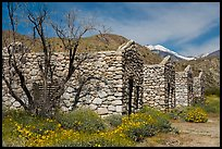 Ruined stone cabins and San Giorgono Mountain. Sand to Snow National Monument, California, USA ( color)