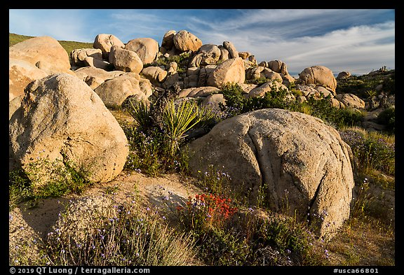 Wildflowers, yucca and boulders, Flat Top Butte. Sand to Snow National Monument, California, USA (color)