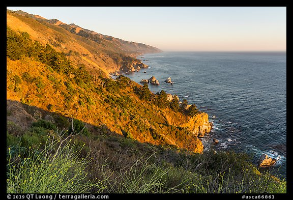 Blooms and costline from Partington Point at sunset. Big Sur, California, USA (color)