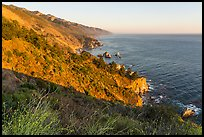 Blooms and costline from Partington Point at sunset. Big Sur, California, USA ( color)