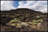 Lava field and Pisgah cinder cone. Mojave Trails National Monument, California, USA ( color)
