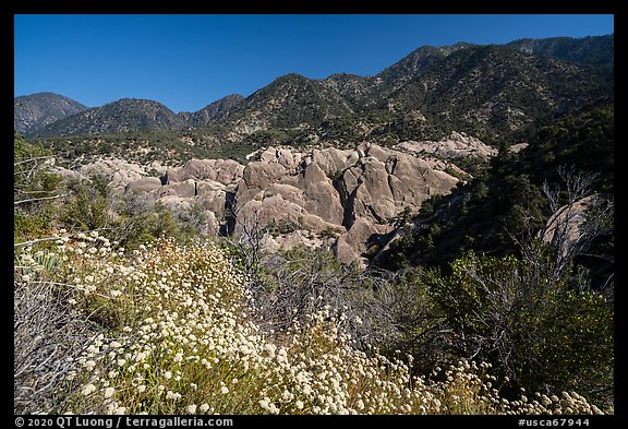 Wildflowers, sandstone fins in Punchbowl Canyon. San Gabriel Mountains National Monument, California, USA (color)