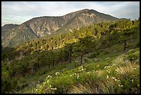 Mt Baden Powell from Blue Ridge. San Gabriel Mountains National Monument, California, USA ( color)
