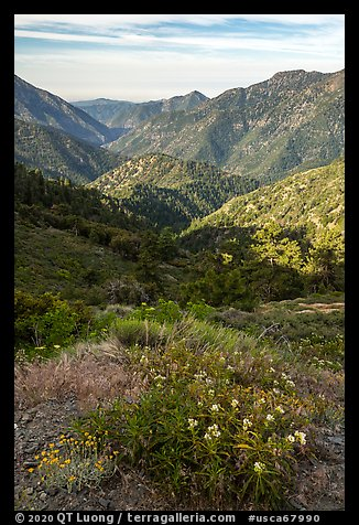 Wildflowers and Rattlesnake Peak. San Gabriel Mountains National Monument, California, USA (color)